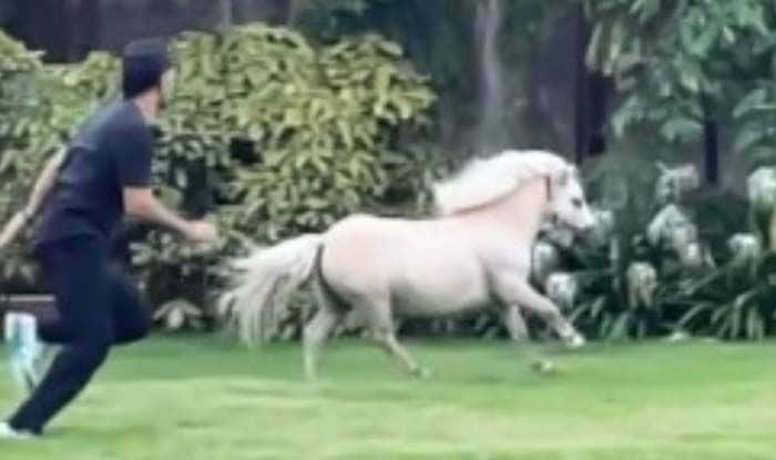 MS Dhoni race with horse, wife sakshi shares video