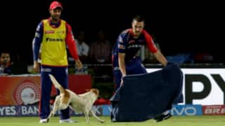 Video: Before rain, dog interrupted RPS-DD IPL 9 match; refused to leave the field