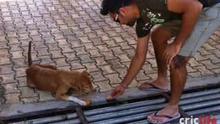 Rohit Sharma's kind gesture for stray dog