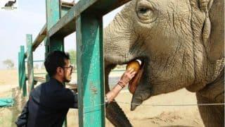 Chahal visits elephant rescue centre
