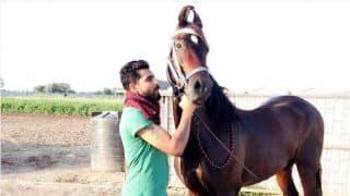 Ravindra Jadeja's 'horses for courses'