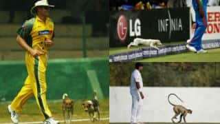 30 instances of cricket's affair with animals